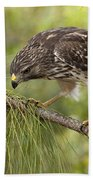 Red Shouldered Hawk Photo Bath Towel