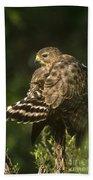 Red-shouldered Hawk Wild Texas Bath Towel