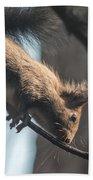 Red Squirrel Licking Dew Droplets  Bath Towel