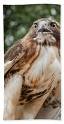 Red Tail Hawk Bath Towel
