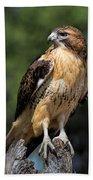 Red Tail Hawk Portrait Bath Towel by Dale Kincaid