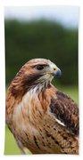 Red Tailed Hawk Bath Towel