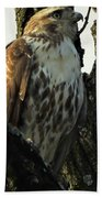 Red Tailed Morning Bath Towel