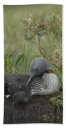 Red-throated Loon With Chick On Nest Bath Towel