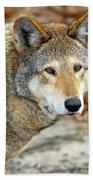 Red Wolf Portrait Bath Towel