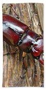 Reddish-brown Stag Beetle - Lucanus Capreolus Bath Towel