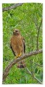 Red-shouldered Hawk Bath Towel