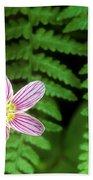 Redwood Sorrel Wildflower Nestled In Ferns Bath Towel