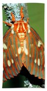 Regal Moth Bath Towel