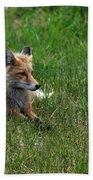 Relaxing Red Fox Hand Towel