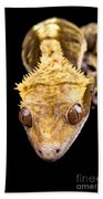 Reptile Close Up On Black Bath Towel