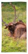 Resting Elk Bath Towel