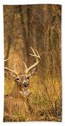Resting White-tailed Deer Buck Bath Towel