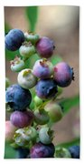 Ripening Blueberries Bath Towel