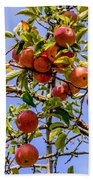 Ripening In The Sun Hand Towel