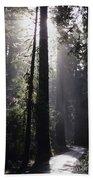 Road Through Redwoods Bath Towel