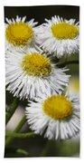 Robin's Plantain Wildflowers - Erigeron Pulchellus Bath Towel
