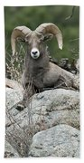 Rocky Mountain Big Horn Bath Towel