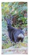 Roe Buck In Woodland Bath Towel