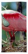 Roseate Spoonbill Adult In Breeding Bath Towel