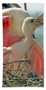 Roseate Spoonbill Feeding Young At Nest Bath Towel