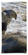 Rough-legged Hawk On A Mule Deer Kill Bath Towel
