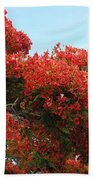 Royal Poinciana Branch Bath Towel