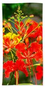 Royal Poinciana Bath Towel