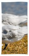 Royal Tern Bath Towel