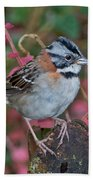 Rufous-collared Sparrow Bath Towel
