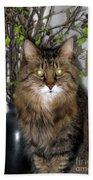Runcius- Palm Sunday Kitty Bath Towel