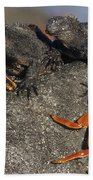 Sally Lightfoot Crabs And Marine Bath Towel