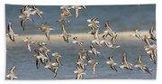 Sanderlings And Dunlins In Flight Bath Towel