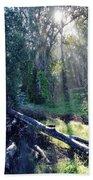 Santa Barbara Eucalyptus Forest II Bath Towel