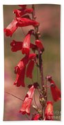 Scarlet Colorado Penstemons Bath Towel