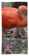 Scarlet Ibis One Legged Pose Bath Towel