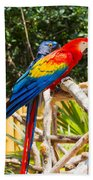 Scarlet Macaw Hand Towel