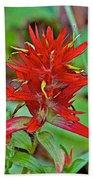 Scarlet Paintbrush On Trail To Swan Lake In Grand Teton National Park-wyoming- Bath Towel