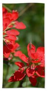 Scarlet Paintbrush. Texas Wildflowers. Castilleja_indivisa Bath Towel