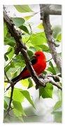 Scarlet Tanager - 11 Bath Towel