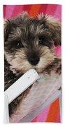 Schnauzer Puppy Looking Over Top Bath Towel
