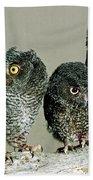 Screech Owl Chicks Bath Towel