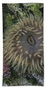 Sea Life Bath Towel