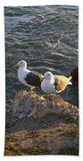 Seagulls Aka Pismo Poopers Hand Towel