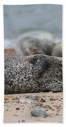 Seal Pup On Beach Bath Towel