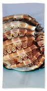 Seashell Wall Art 9 - Harpa Ventricosa Bath Towel