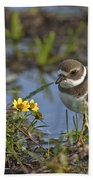 Semi-palmated Plover Pictures 44 Bath Towel