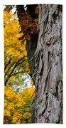 Shagbark Hickory Tree Bath Towel