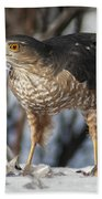 Sharp-shinned Hawk And Feather Bath Towel