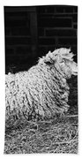 Sheep 2 Bath Towel